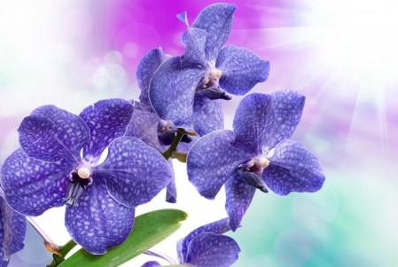 鸢尾 蓝色花朵鲜花4k图片