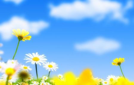 花卉蓝天背景4k图片