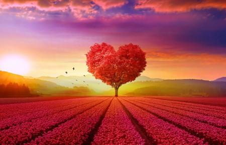 浪漫的心脏树3440x1440风景高端电脑桌面壁纸