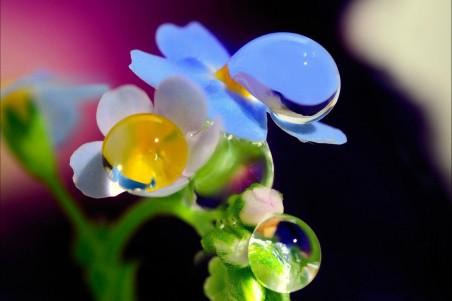 花,露水,高清图片
