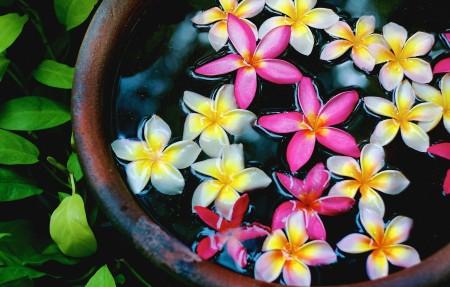 水缸粉红色和白色的鸡蛋花4k图片