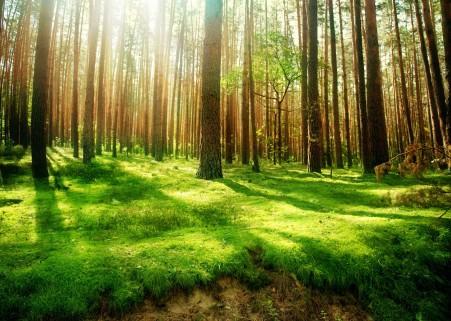 美丽的大自然,森林,树木,绿色草地,太阳,自然风景高清图片