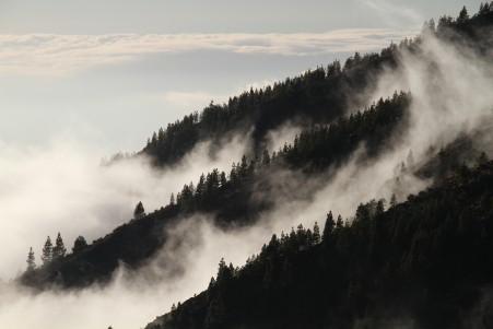 雾 森林 5k风景图片