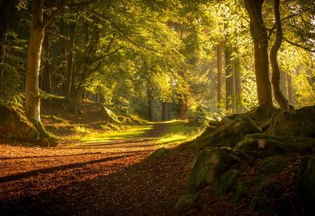 苏格兰 秋天 道路 森林 树木 4k风景图片