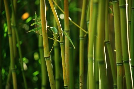 自然,竹子,竹茎灌木,绿色竹叶,高清4K竹子风景图片