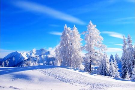 冬季,雪,自然,山,树林,风景图片
