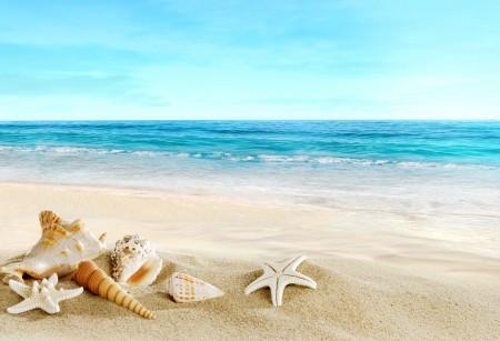 贝壳,海星,沙滩,美丽的大海风景图片