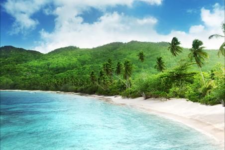 自然风景,海水,沙滩,树,天空背景,高清图片