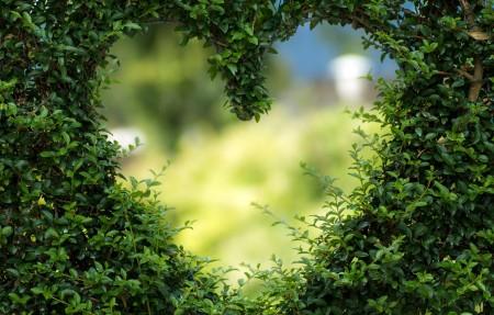 心的绿叶4k高清图片