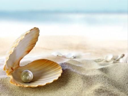 贝壳,沙滩,珍珠,高清图片