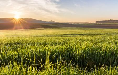 农场 上午 草 阳光 日出 4k风景图片