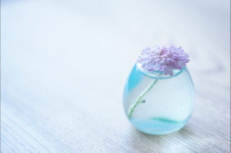 花瓶,水,粉红色的鲜花,简单干净清爽背景图片