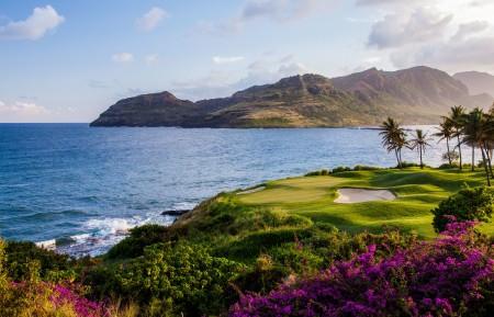海洋,海岸,鲜花,丘陵,植物,棕榈树,风景图片