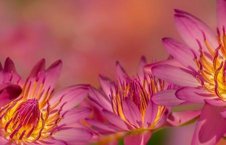粉色鲜花5k图片