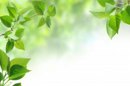春天,树枝,树叶,绿色叶子高清5K背景图片
