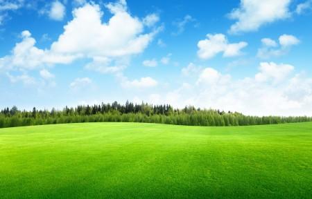 绿色草地,天空,云,树,美丽风景图片