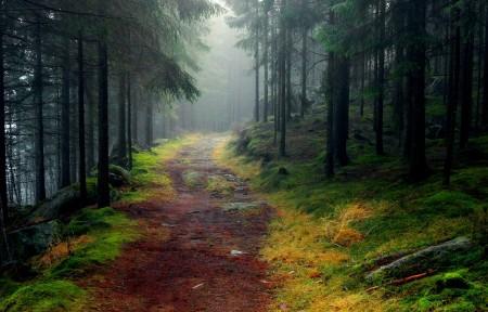 道路 森林 树木 雾 石头 苔藓 云杉 4k风景图片