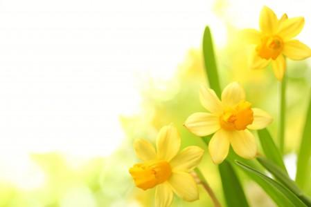 鲜花,黄色的花瓣图片