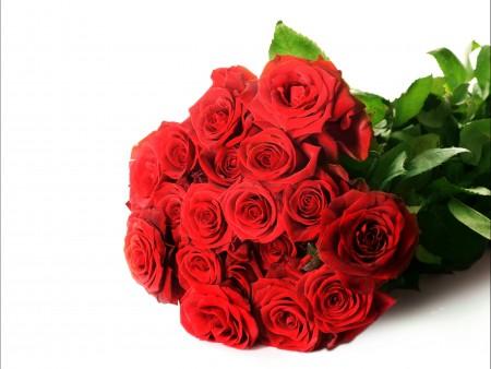 红色玫瑰花照片5K高清图片