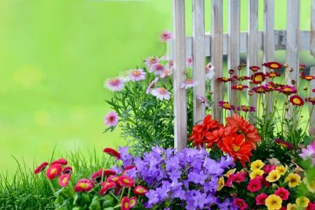 鲜花 栅栏 4k图片