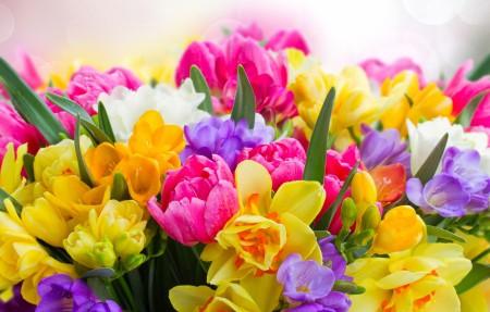 美丽的春天的花朵4k高清高端电脑桌面壁纸