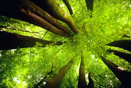 天空,树,树干,绿色树叶,自然风景图片