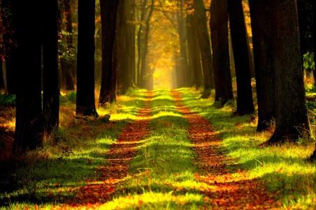森林-远景-旅游-车道4K风景图片