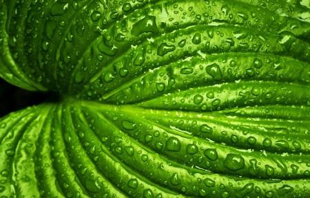 湿叶 叶子 水滴 4k高清超高清壁纸精选