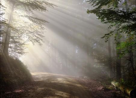 早上 雾 阳光 森林4K风景图片