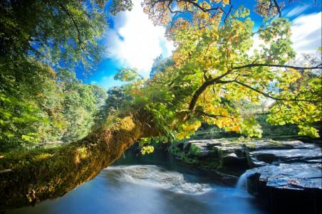 树叶 河流 小溪 树木 灌木 苔藓 自然风景4k高端电脑桌面壁纸