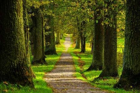 春天,森林,公园,树木,道路,自然风景图片