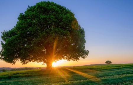 天空草地树阳光风景4k高清高端电脑桌面壁纸