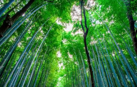 日本竹林风景3440x1440高端电脑桌面壁纸