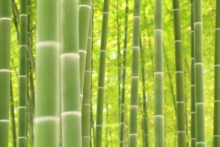 竹子4k图片