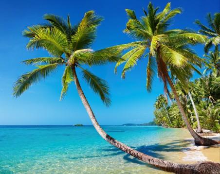 棕榈树,海岸,蓝色大海天空,海边自然风景图片