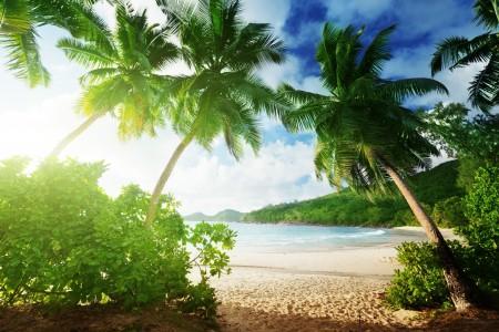 大海,沙滩,棕榈树,天堂,夏天,海岸风景图片