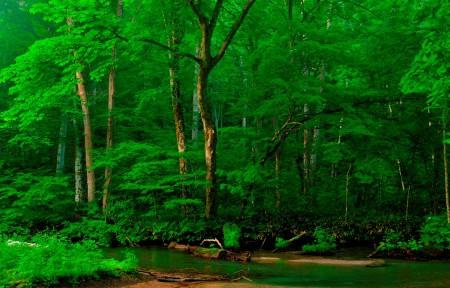 森林 树木 河流 阿尔卑斯山自然风景4k高清图片
