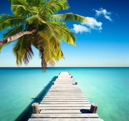 热带天堂,棕榈树,码头,海岸海洋,5K高清风景图片