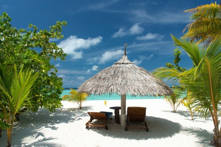 大海,沙滩,棕榈树,夏天,假期,风景图片