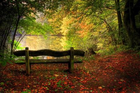 湖,秋季,树木,椅子,落叶,自然风景图片