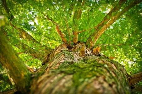 森林 树 绿叶 分枝 高清4k图片