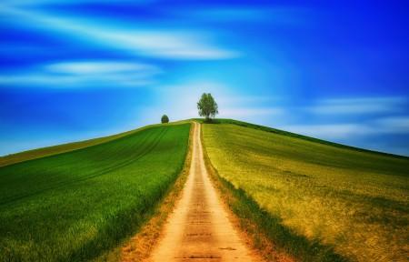 树 天空 丘陵 步行 5k风景图片