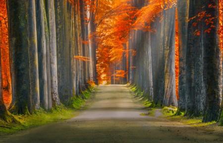 森林秋天阳光道路3440x1440风景高端电脑桌面壁纸