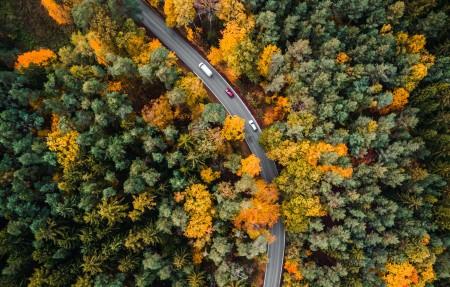 秋天路在树林里_航空摄影4k高端电脑桌面壁纸3840x2160