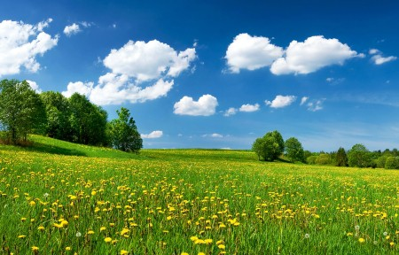 蓝天白云树丛和花海3440x1440风景高端电脑桌面壁纸