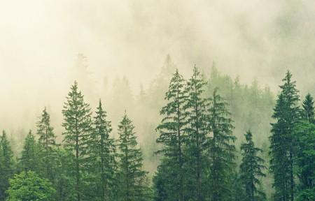 绿色树林3440x1440风景高端电脑桌面壁纸