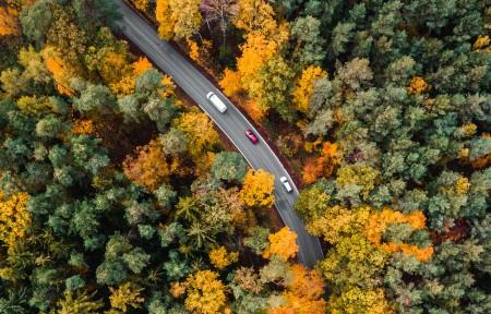路在树林里 航空摄影3440x1440高端电脑桌面壁纸