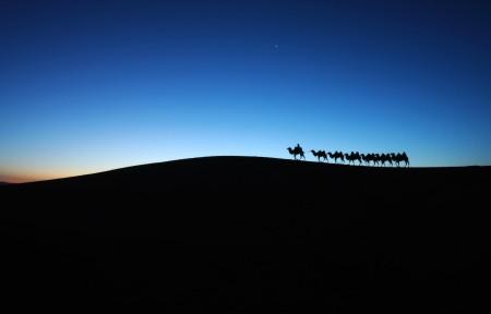 沙漠黎明骆驼车队3440x1440高端电脑桌面壁纸