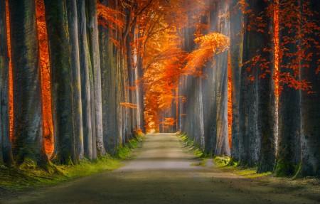 森林秋季阳光通路4k风景高端电脑桌面壁纸
