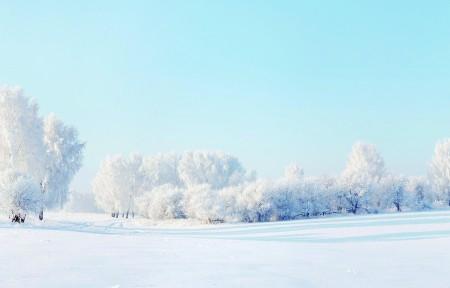 冬天雪景树雪地3440x1440高端电脑桌面壁纸